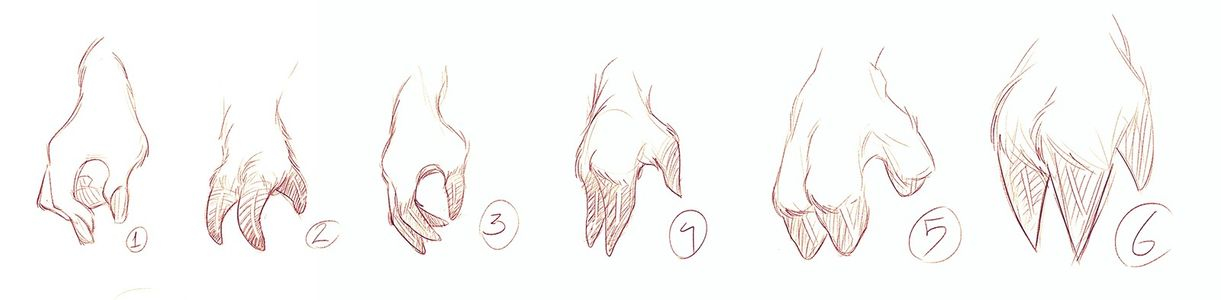 Hooves / Hands Study